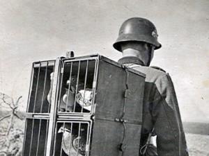 Váleční poštovní holubi
